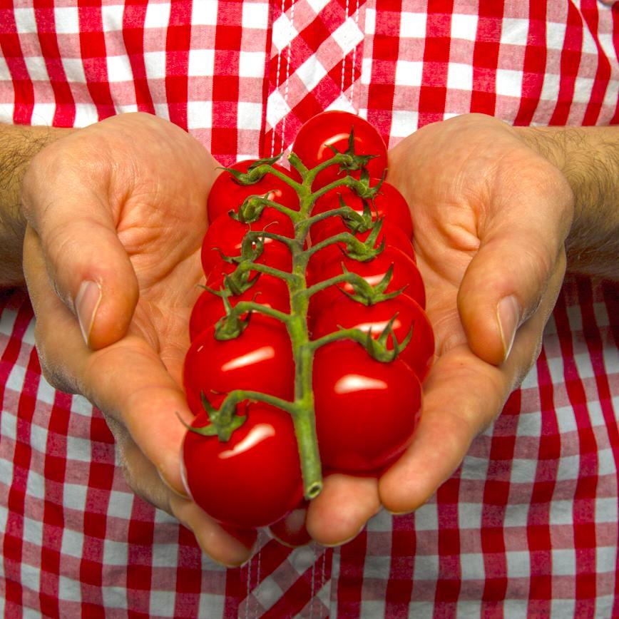 Prečo jesť paradajky každý deň?
