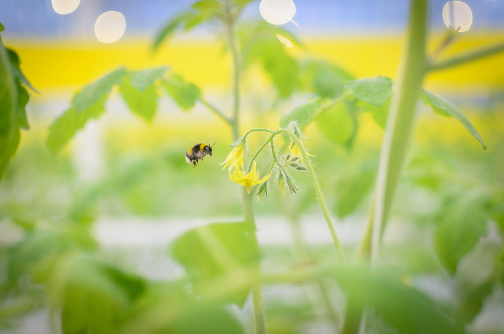 Bez pesticídov